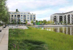 Ufergrünzug am Wasserbecken - die Pflanzen reinigen das Wasser auf natürlich Weise. Foto: BUWOG Bauträger GmbH / Michael Divé
